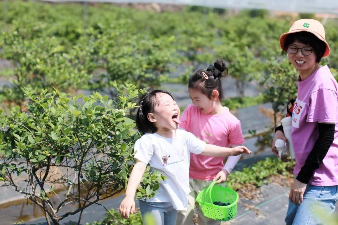 【上海蓝莓文化体验园】48元1大1小蓝莓畅吃!魔都这家网红蓝莓采摘地,蓝莓可以采摘畅吃,一步踏上水果鄙视链顶端,不来你就out了!!!