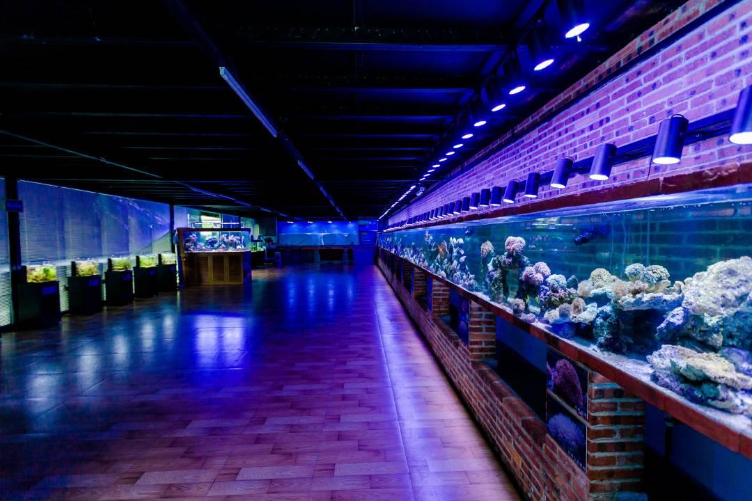 【中山小榄】人气爆款!买到就是挣到!29.9元抢帆鲨海洋文化馆双人门票,不分大小,不限身高,整个暑假都可用,快来一起畅游海底世界吧~