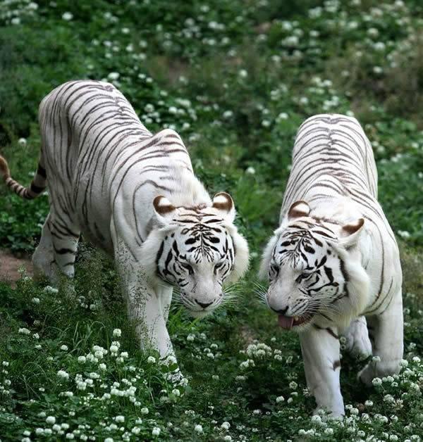 国宝亚洲象 濒危物种之一的动物,也是中国一级野生保护动物,该园区该