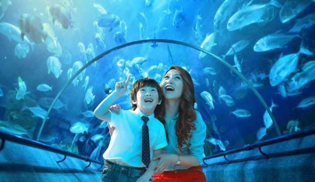 壁纸 海底 海底世界 海洋馆 水族馆 640_369