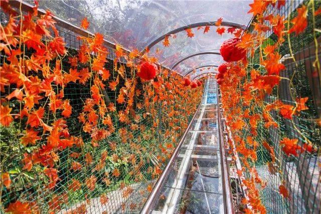 网红玻璃桥 越王山门票 巴伐利亚