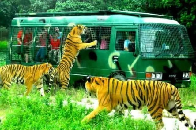 野生动物园和动物园有什么区别?