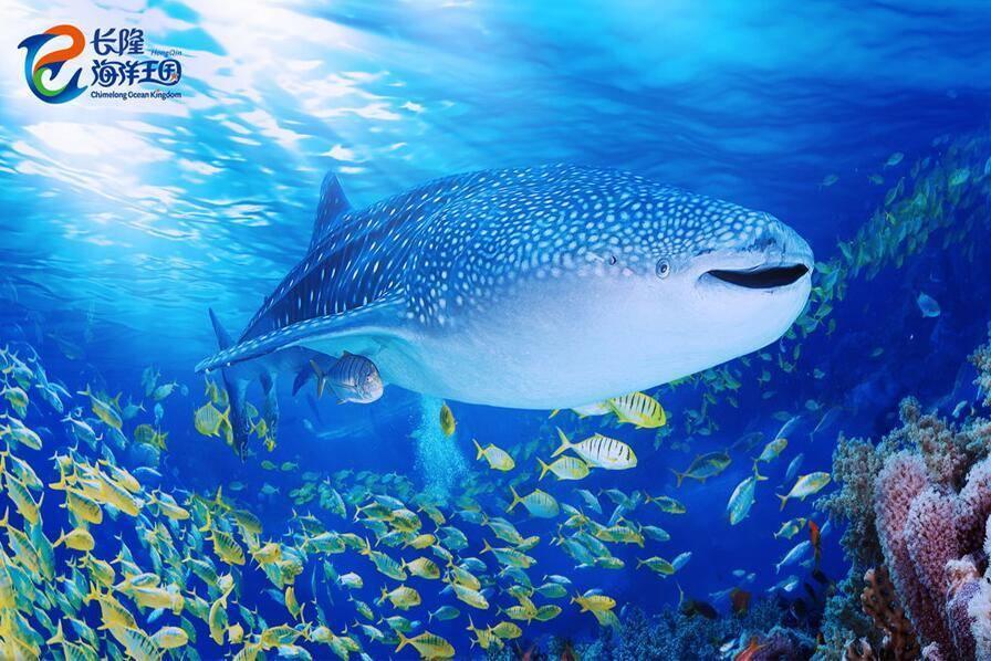 """""""海底餐厅""""则是广东首个大型海底景观餐厅,拥有全球最大的海洋水族馆"""