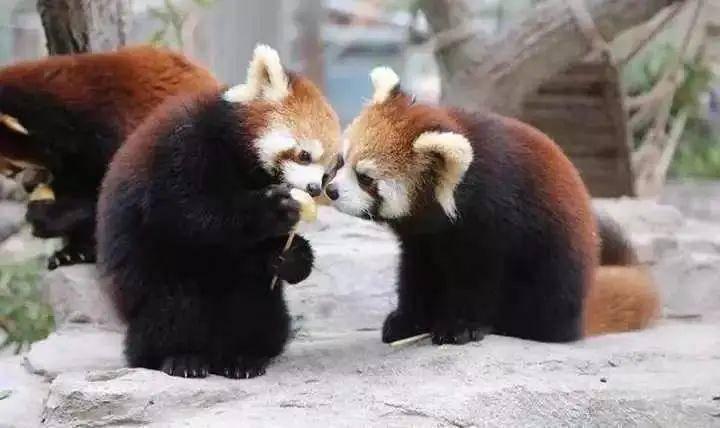 【系统补单专用】上海野生动物园门票(2020特惠)