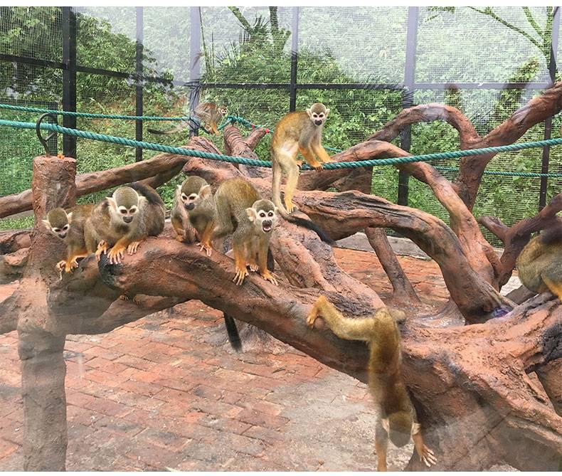 佛山南丹山森林王国---儿童套票(门票+松鼠部落+动物表演+欢乐天地120元游乐金)