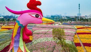 【中山】小榄菊花会门票成人票、老人票(平日、周末)11.23-12.10