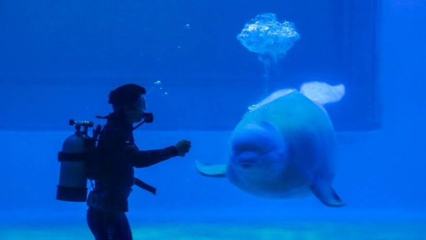 【深圳小梅沙海洋世界】69.9元搶購原價170元小梅沙海洋世界門票