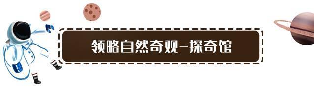 【深圳·南山】18000㎡的室内自然探索世界!63元抢价值128元『贝尔探奇馆』成人票:畅游9个项目:奇幻古堡+神秘秘境+异星探奇等!寓教于乐的乐园,大人小孩都开心!