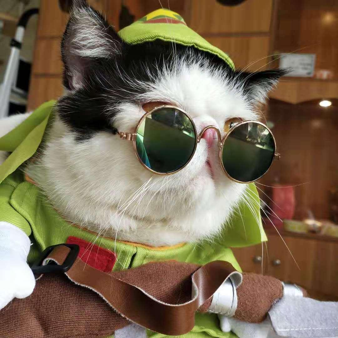 【深圳南山·门票】5.6折!直降39元!我的撸猫圣地!49.9元抢89元『倦猫馆』双人套票:双人门票1张+饮品2份+猫粮1份,周末节假日通用,享受和猫猫在一起的惬意时光~