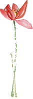 【深圳】【南山创客小镇·亲子】当季鲜果采摘!人均不到20元!39.9元抢50元『创客小镇荔枝龙眼园』1大1小龙眼采摘门票:入园任摘任吃+免费带走1斤自摘龙眼;69.9元抢100元『创客小镇荔枝龙眼园』2大2小龙眼采摘门票:入园任摘任吃+免费带走2斤自摘龙眼!品尝鲜果/亲子采摘/打卡拍照/户外休闲/亲近自然都是你的选择~