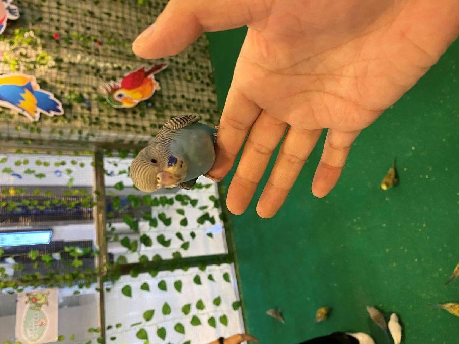 【深圳.门票】限量500张~汇海广场飞鸟乐园双人票,即买即用,尽情亲近小动物与它们0距离互动接触~