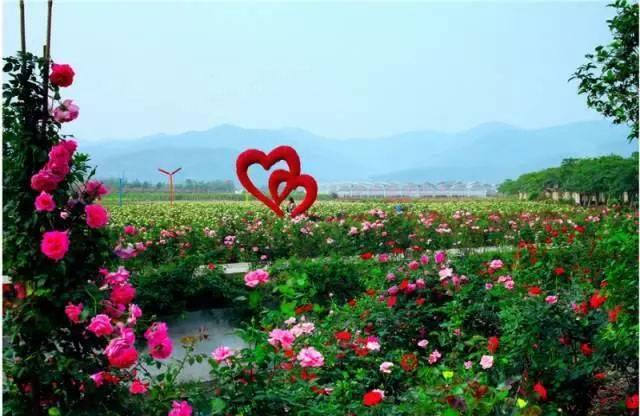 【广州·从化】¥69元抢宝趣玫瑰世界2大2小家庭套票!周末、节假日通用!景区各式花海!春暖花开~繁华漫境 ~