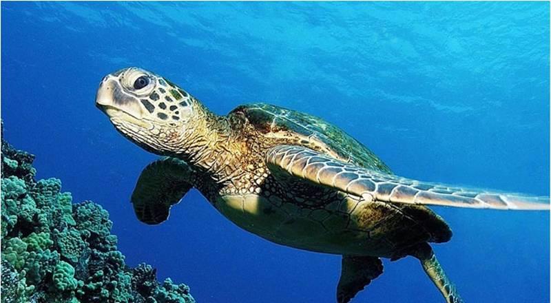 是一个集观赏性, 趣味性,知识性于一体的综合性海洋动物展馆图片