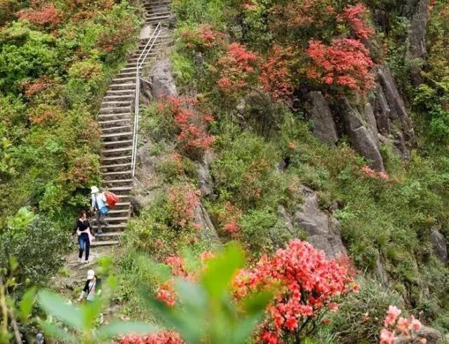 【68元抢】免预约清远连山金子山生态风景区2大1小套票,赏杜娟,攀天梯