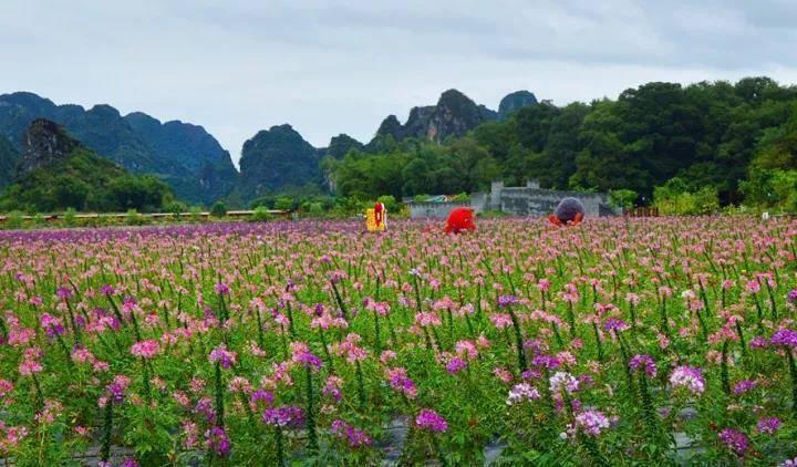 【清远】英德九龙小镇国际生态农业度假区 箱亲箱爱燕子屋双床/大床房