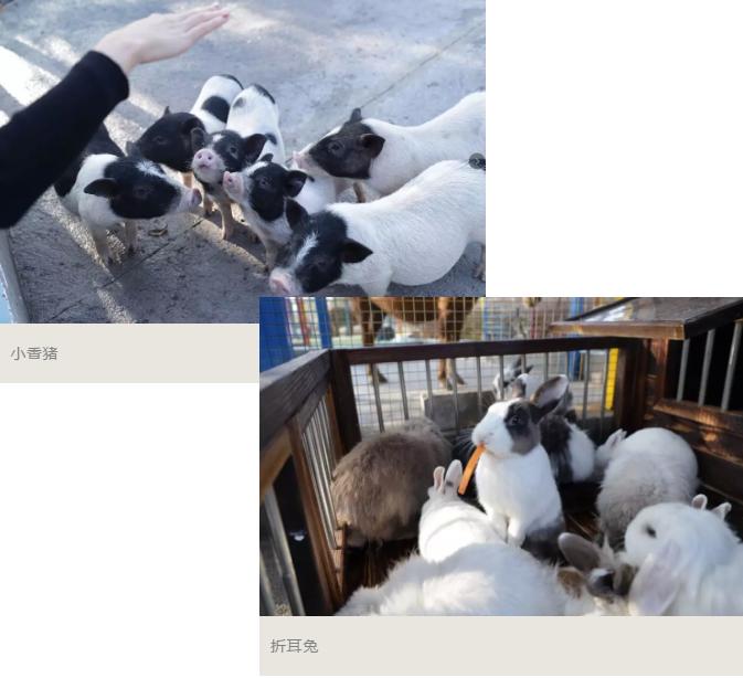 【5折预售】高明美的鹭湖爱丽丝庄园单人票~22元抢购(B产品,2020年3月6日-6月30日适用)
