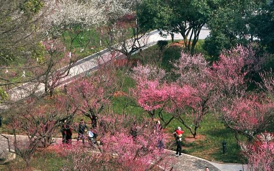 【杭州】超山风景区成人票(梅花节)