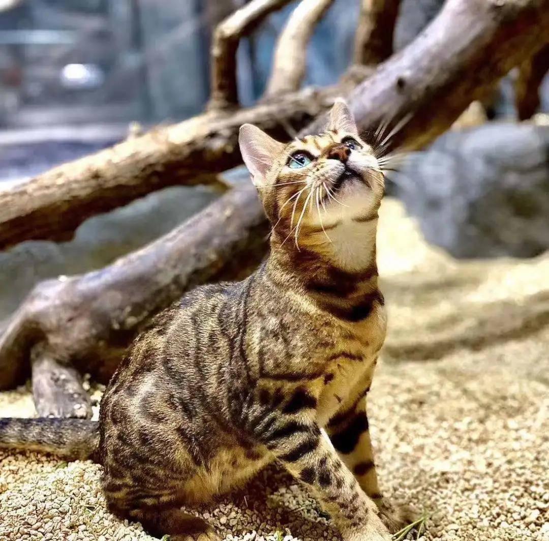 ¥79「Mr.Zoo小小动物元」嘉兴经开万达中心店,mini版大自然,科普讲解式游园,撸遍50+小动物