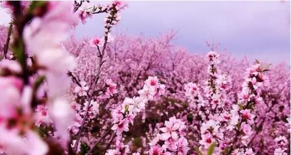 【惠州】秋游的脚步走起来! 46.8元抢永记生态园门票,让你与花海来一场浪漫的邂逅~~