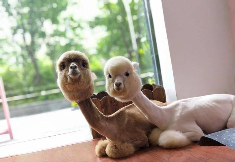 【上海】萌物天堂绝对萌你一脸!星萌宠双人月卡149元(原价198)带您走进星萌宠小版动物园,体验近距离撸宠和休闲的乐趣! 周末通用!