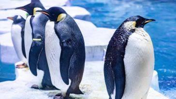 【上海海昌】双十二特惠~180元抢上海海昌海洋公园日场门票儿童票