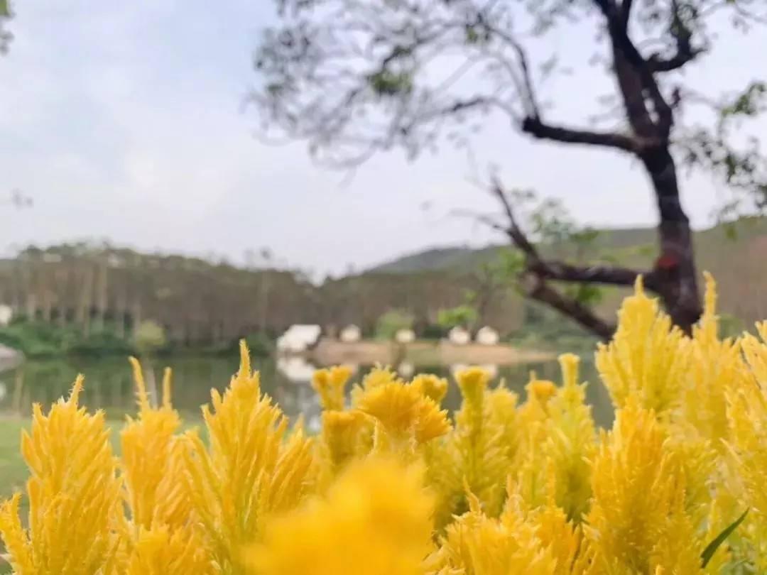 【肇庆】不出远门,不人挤人,远离城市,猫爪谷给您一个别样新年!29.9抢两大两小门票+游船体验+花海观赏~全家亲近大自然