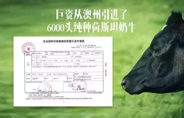 【全国包邮】89元=2提,抢购认养一头牛纯牛奶,无数人的选择,薇娅直播间推荐,喝中国放心奶,健康好滋味~