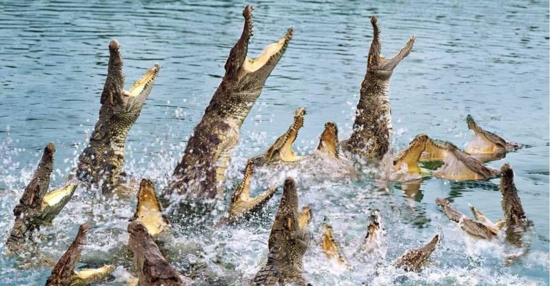 【广州】长隆飞鸟乐园特惠来袭,99元抢1大1小亲子套票,看各种珍稀鸟类,鳄鱼,大河马,火烈鸟等~