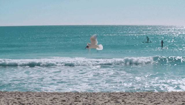 【惠州·巽寮湾】相约夏季,激情出游,仅需99元/套,坐拥巽寮湾核心区域,毗邻天后宫~暑期平日周日-周五不加收 ~周六超低的加收~世界级海滨浴场!离沙滩五分钟~美滋滋约起来~!