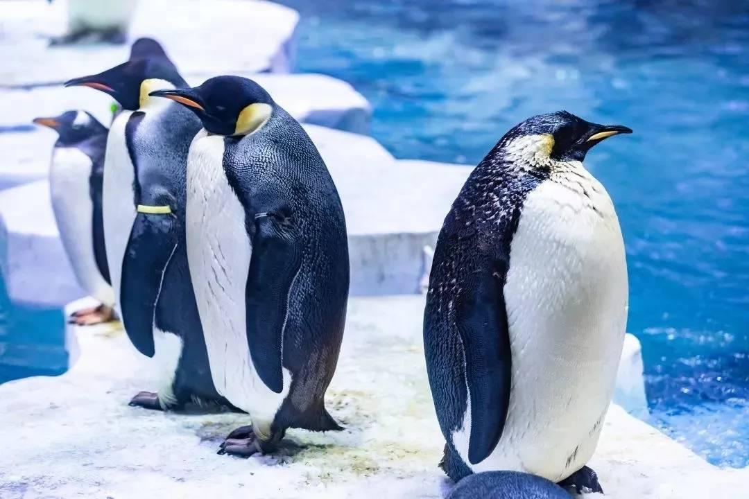 【上海海昌海洋公园】超值特惠!249元抢暑期特惠票!07.20-07.31期间!各式各样海洋萌宠、虎鲸表演等你开启清凉的夏日游览模式!