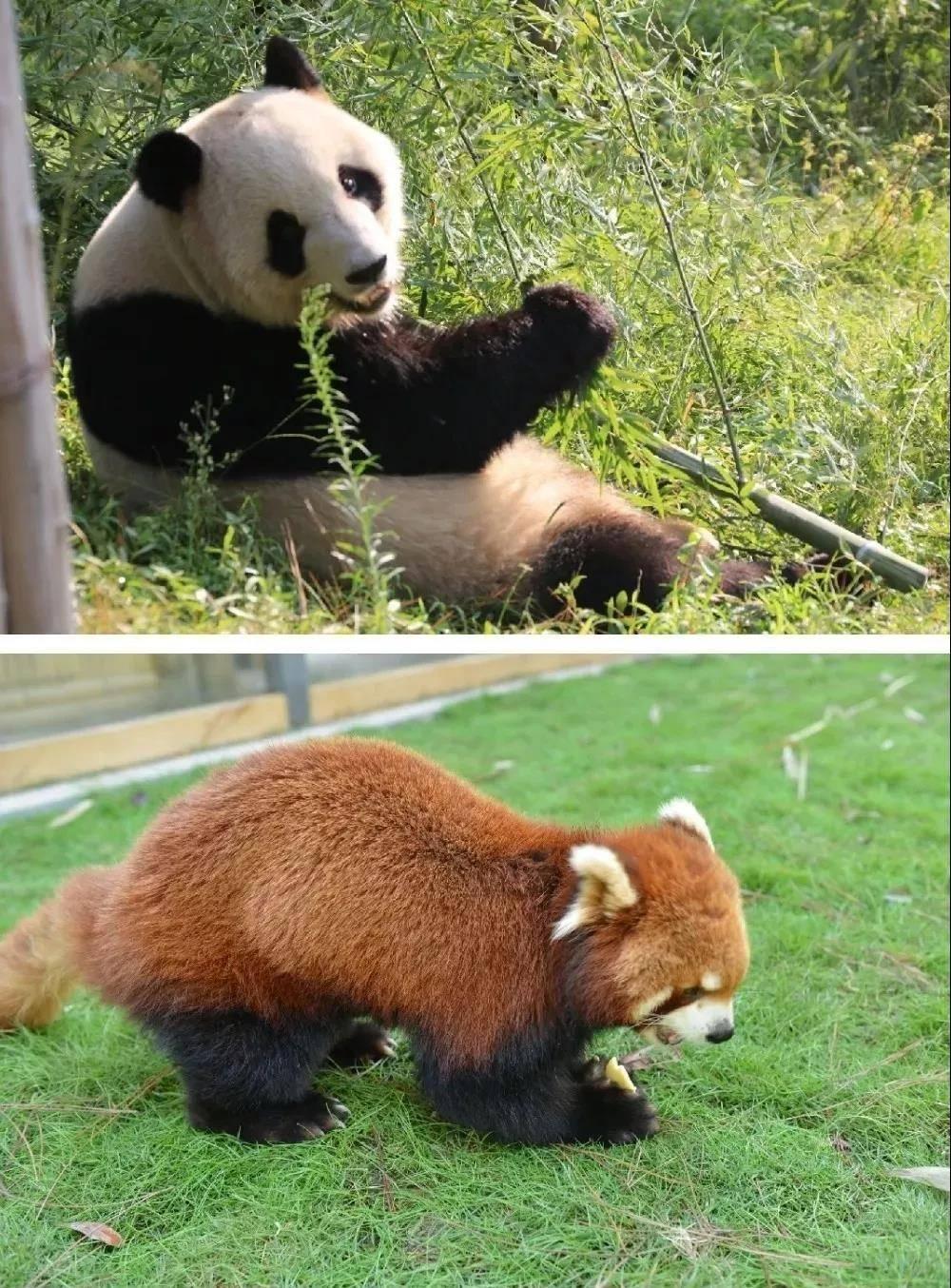 【安吉4房别墅】周五不加收!人均180+,可入住8大4小~畅玩棋牌室、卡拉OK、桌球、做饭等,别墅5分钟车程去看熊猫!