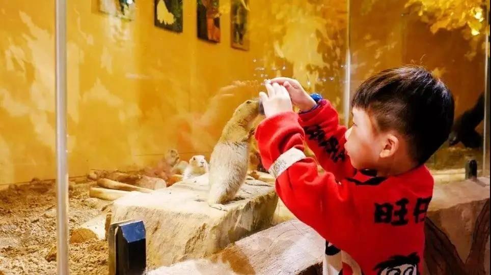 ¥129「Mr.Zoo小小动物元」mini版大自然,科普讲解式游园,撸遍50+小动物,还能观察蚂蚁奇兵or做小小厨师!