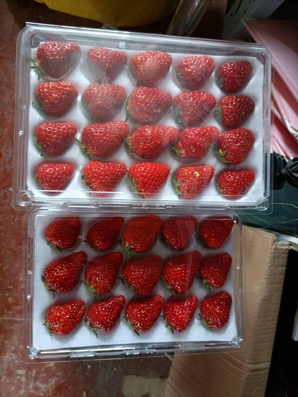 【杭州】约会春天,69.9元限时抢购『金马草莓园』亲子游采摘套餐!摘金牌草莓,3斤草莓免费带走!还有千亩油菜花游览!