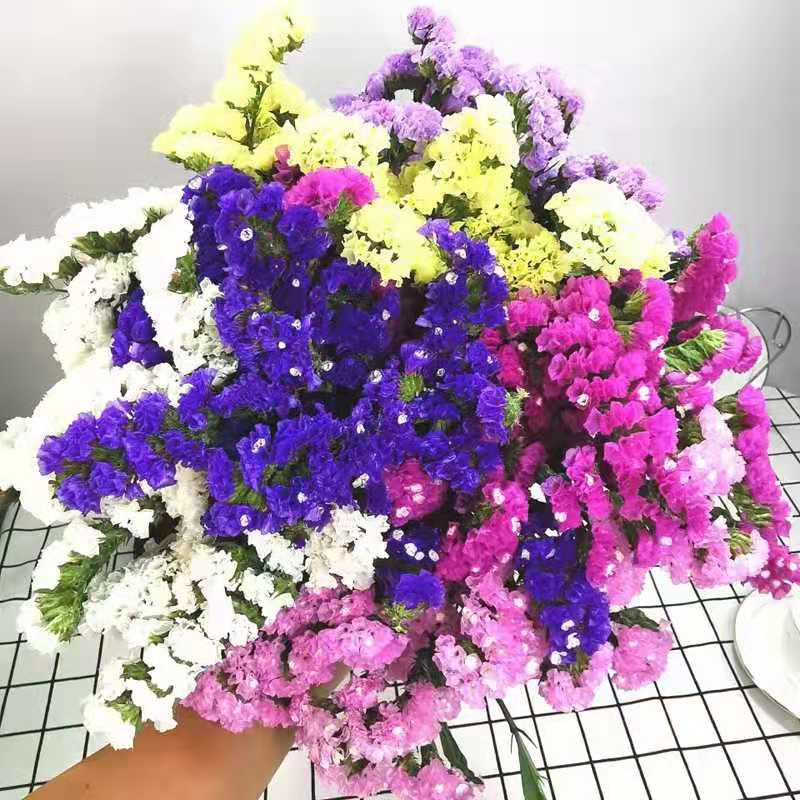 【包邮】19.9元抢购勿忘我三色混装2扎!女神节必备礼物,为家增添色彩!