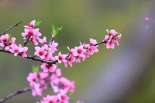 【清远】1元预售【限量】¥1元抢购年丰棉花地桑果园任摘任吃门票