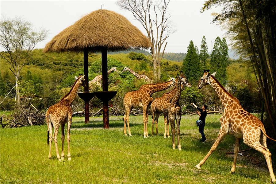 长颈鹿庄园酒店 | 吃喝玩乐一价全包套餐!野奢房+自助早餐&晚餐+庄园门票+吃喝玩乐套票+丛林飞跃+室外攀爬+淘气堡